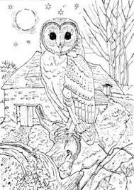 Vary Detailed Barn Owl Colouring Pages Adults Printable