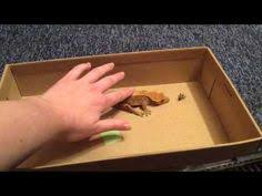 Crested Gecko Shedding Signs by Temperatures For Crested Geckos Aim For About 75 Degrees F Make