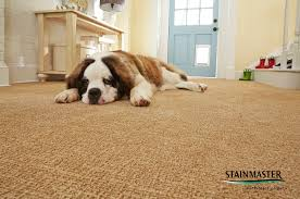 Coles Fine Flooring Teacher Giveaway by 3 Tips For Keeping Your Pets Safe During A Disaster Coles Fine