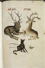 431 best mammals images on Pinterest