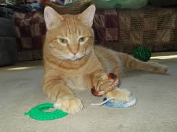 cat in house does your cat hide his toys around the house catster