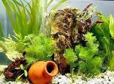 aquarium d eau douce déco d aquarium en eau douce