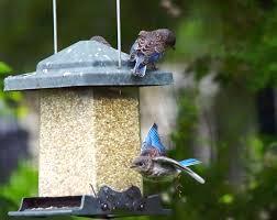 A Recap of The Breeding Season – Petals and Wings