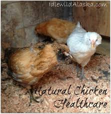 Natural Chicken Healthcare #ChickenHealth, #EssentialOils ... Why Should You Compost Chicken Manure Is Naturally High In 1105 Best Backyard Project Images On Pinterest Raising Baby Chick Playground Coops Pet Chickens And Worming Backyard Controversial Here Are Tips How To Naturally Treat Coccidiosis Your Chickens Natural Treatment Of Vent Prolapse Ducks 61 To Me Raising Means Addressing Healthkeeping Deworming Homesteads