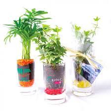 plante d駱olluante bureau plante publicitaire en verre avec graviers colorés objet pub nature