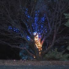 Christmas Lights Can Be Strung Through A Trees Branches