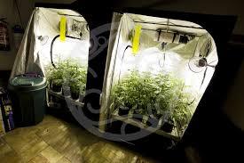 chambre de culture cannabis complete comment monter une chambre de culture