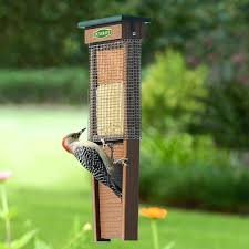 Suet Feeder For Woodpecker Woodpecker Suet Shield Wrap Feeder