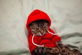 cat hoodies hoodie cats hoodie and cat