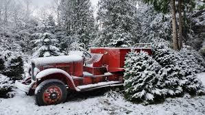 Christmas Tree Baler Used by Frequently Asked Questions U2014 Keith U0026 Scott Tree Farm