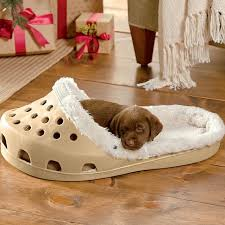 Pampered Pets Bed And Biscuit by 21 Pet Beds That Won U0027t Ruin Your Decor Chocolate Lab Puppies