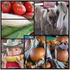 Pumpkin Patch Power Rd Mesa Az by Dewitt Stables Pumpkin Patch Mesa Az Kid Friendly Activity