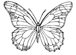 Free Butterfly Coloring Pages Printable Print