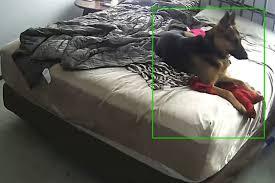 frau filmt heimlich ihren hund und staunt nicht schlecht