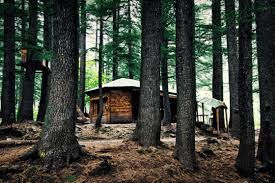5 Super Normal Cabins in The Woods You Can Rent This Fall
