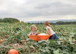 Pick Of The Patch Pumpkins Concord by Pick Your Own Farms Capitol Momma