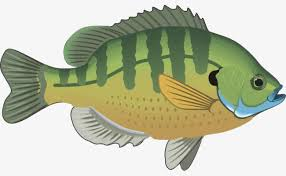 Hand Painted Fish Clipart Cartoon PNG Image And