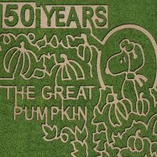 Denver Pumpkin Patch Corn Maze by 15 Amazing Corn Mazes U0026pumpkin Patches In Florida