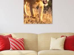 African Queen Lion Art Print