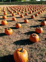 Flower Mound Pumpkin Patch Flower Mound Tx by Flower Mound Pumpkin Patch Paperblog