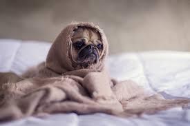Fresh Pumpkin For Dog Diarrhea by How To Cure Dog Diarrhea U0026 Beyond 7 Natural Home Remedies Blog