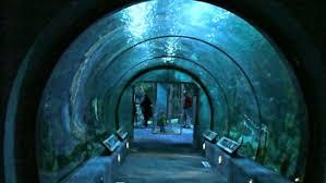 Moody Gardens Aquarium That Mysterious Blue Pyramid