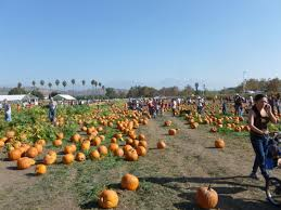 Cal Poly Pomona Annual Pumpkin Patch by Woman In The Middle Pumpkin Time