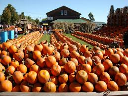 Pumpkin Patch Petting Zoo Illinois by Top 10 U S Pumpkin Patches U2013 The Vacation Times