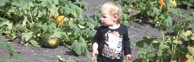Cal Poly Pumpkin Patch San Luis Obispo by About Petaluma Pumpkin Patch And Amazing Corn Maze 707 778 3132