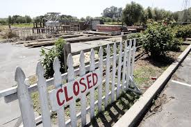 Stanly Lane Napa Pumpkin Patch by Barbecue Makeover Planned For Stanly Lane Ranch Business
