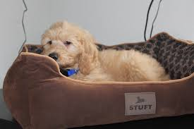Stuft Dog Bed by This Guy Knows What U0027s Up Funny
