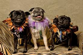 Halloween Warehouse Beaverton Oregon Hours by Pet Talk Halloween Costume Events For You And Your Pooch