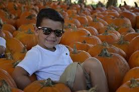 Sarasota Pumpkin Festival by Hunsader Farms Launches 2015 Pumpkin Festival East County Your
