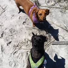 Luckys Bed And Biscuit by Passion For Paws Dog Walking And Pet Sitting Services Dog