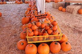 Pumpkin Patch Sacramento Groupon by Mountain Pines Pumpkin Patch California Haunted Houses