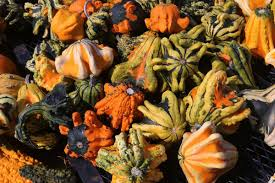 Pumpkin Patch Glendale Co by Closed Rombach Farms Has Pumpkin Patches Trying To Out Fall Each