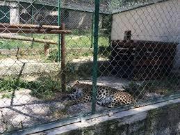fauverie mont faron toulon picture of zoo fauverie du faron
