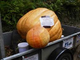 Heaviest Pumpkin Ever by Get Ready For Poundstock U0027s Annual Pumpkin Festival News Bude