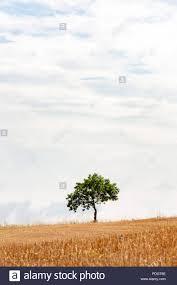 100 Minimalist Landscape Empty Minimalist Landscape With One Tree On The Horizon