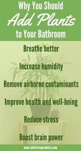 Good Plants For Bathroom by These Bathroom Plants Will Transform Your Space Into A Sanctuary