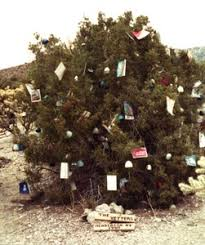 During The Christmas Season Locals Decorate Juniper Trees At Pass Hence