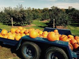 Apple Orchard Pumpkin Patch Sioux Falls Sd by Homestead Orchard Home Facebook