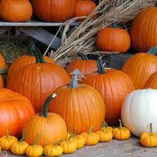 Gust Brothers Pumpkin Farm by Don U0027t Miss These Great Pumpkin Patches In Michigan This Fall
