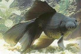 aquarium poisson prix poissons eau froide vente magasin uniquement d aquariums