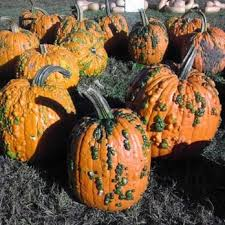 Pumpkin Picking In Chester Nj by Conklin Farms 25 Photos U0026 13 Reviews Farmers Market 65 River