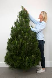 Astounding 5ft Christmas Tree Small Real 150cm Approx The Elves Best