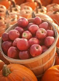 Pumpkin Farms In Belleville Illinois by Tammen Treeberry Farm In Wilmington Illinois Pick Your Own