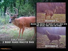 whitetail facts why bucks shed their antlers early hunting