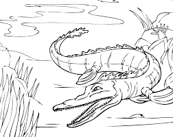 Alligator Coloring Page Photo