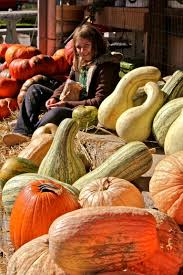 Atlanta Pumpkin Patch Corn Maze by The Top 5 Autumn Activities In Atlanta